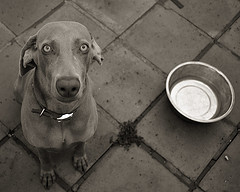 hungrydog